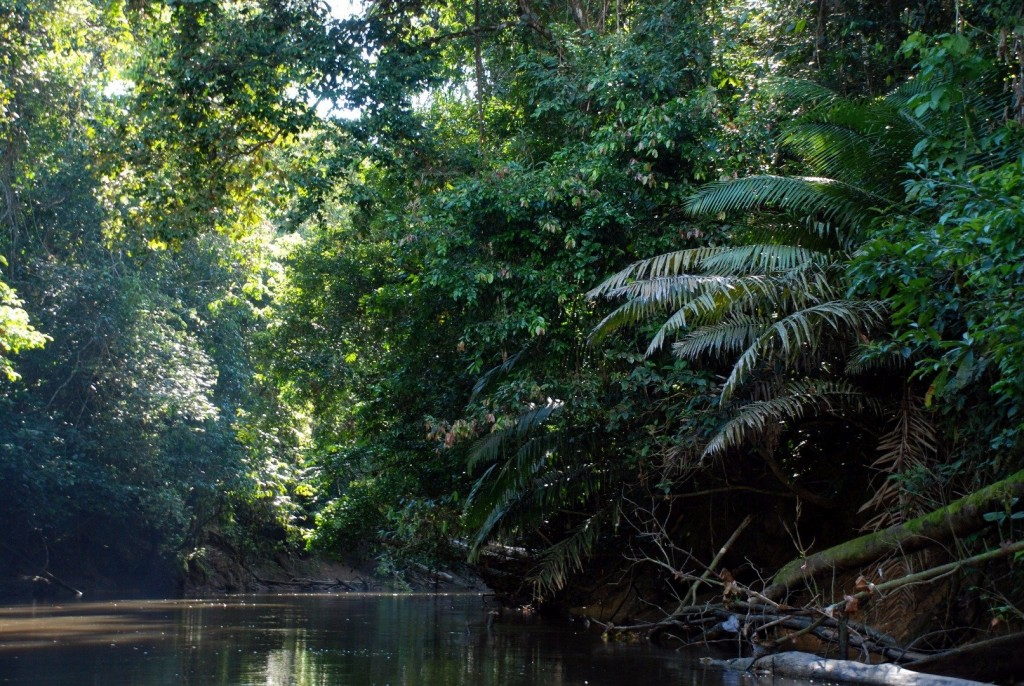 10 Wild Facts About The Amazon