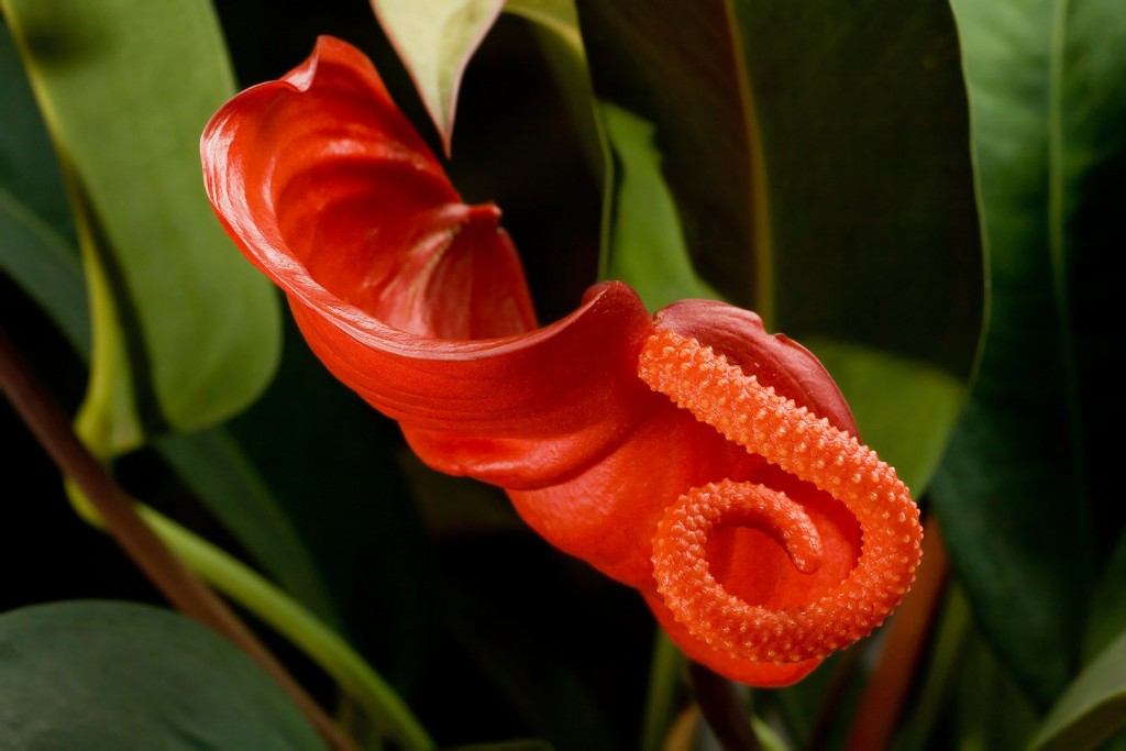 15 Most Bizarre Flowers From Around The World