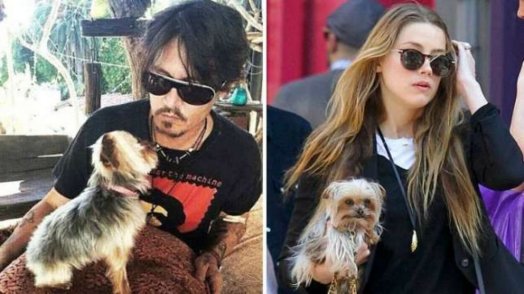 Amber Heard, Johnny Depp's Wife, Being Charged With Dog Smuggling
