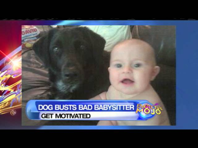 Dog Saves 7 Month Old Baby From Abusive Babysitter