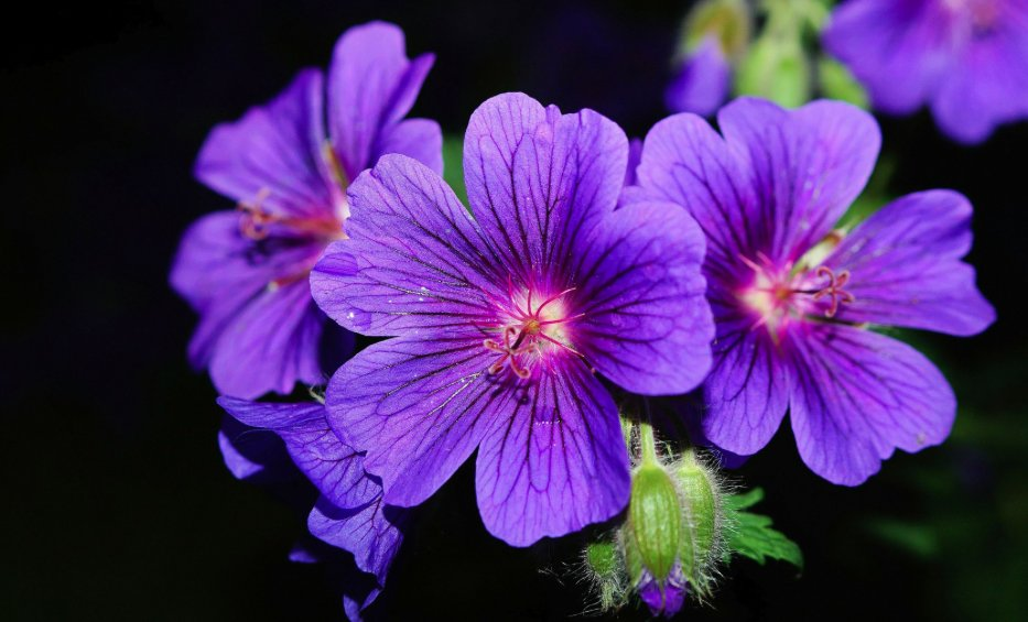 10 Flowers You Didn't Know Were Edible