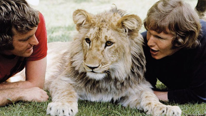 10 Most Amazing Human And Animal Friendships