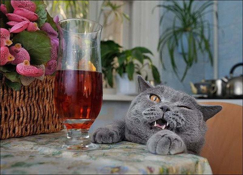 20 Cats That Need To Stop Drinking Alcohol