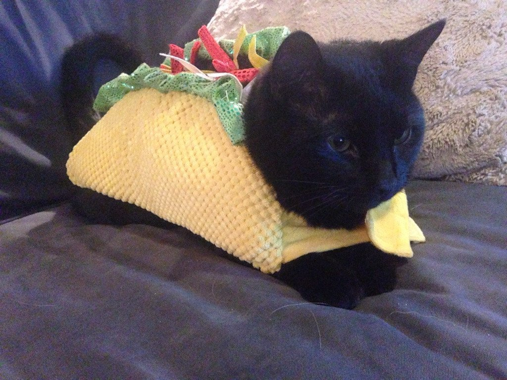 & 20 Of The Funniest Cats In Costumes