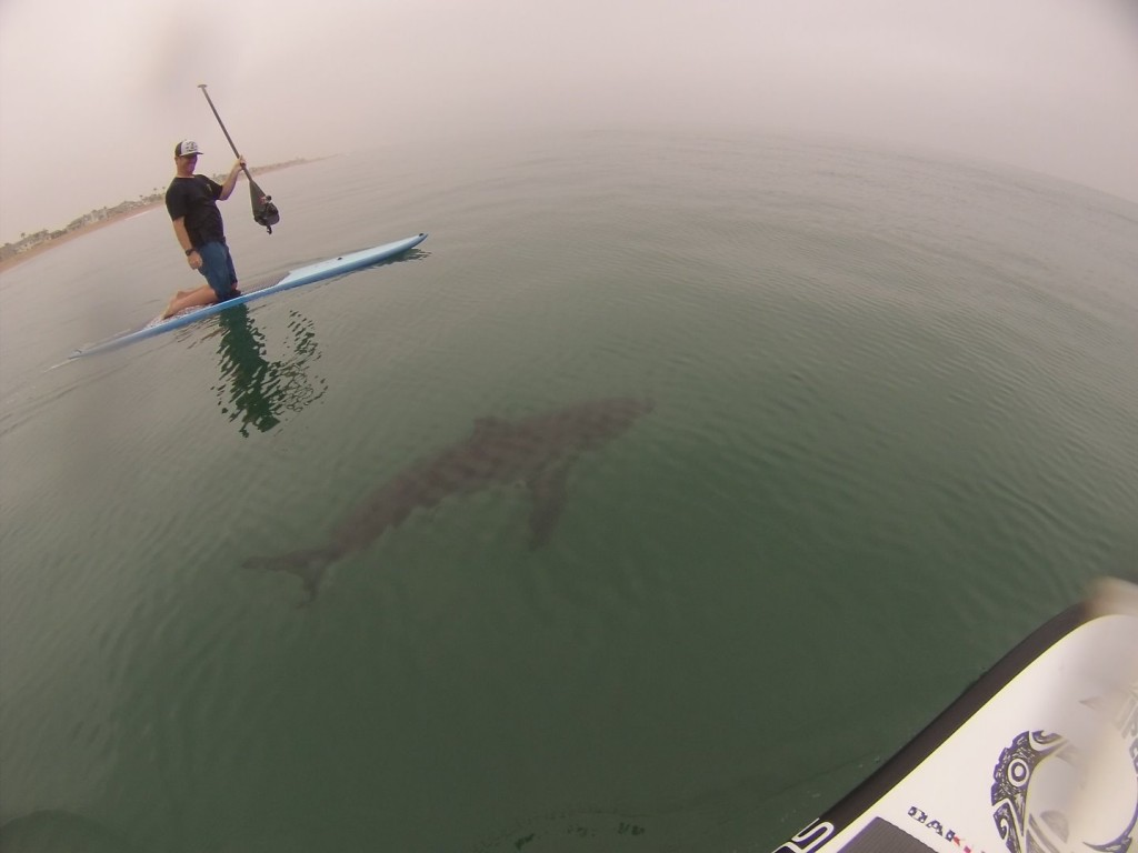 California Will Be Using Drones To Track Sharks Invading Beaches
