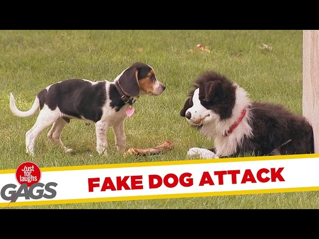Fake Dog Pranks Real Dogs At The Park