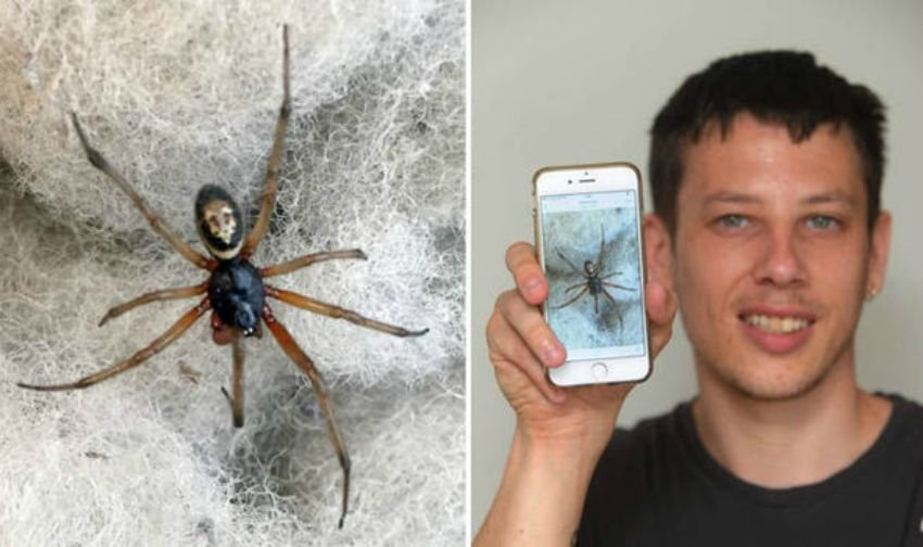 Man Unknowingly Handles Venomous False Widow Spider Bare Handed