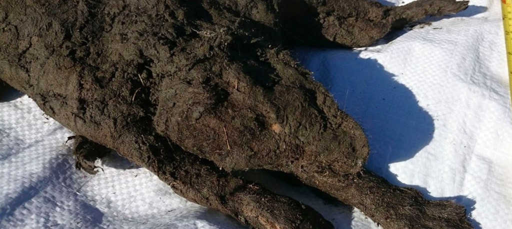 Perfectly Preserved Puppy Found Buried In Serbian Permafrost