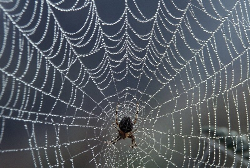 Scientists Create Mutant Spiders With Webs Stronger Than Bulletproof Vests
