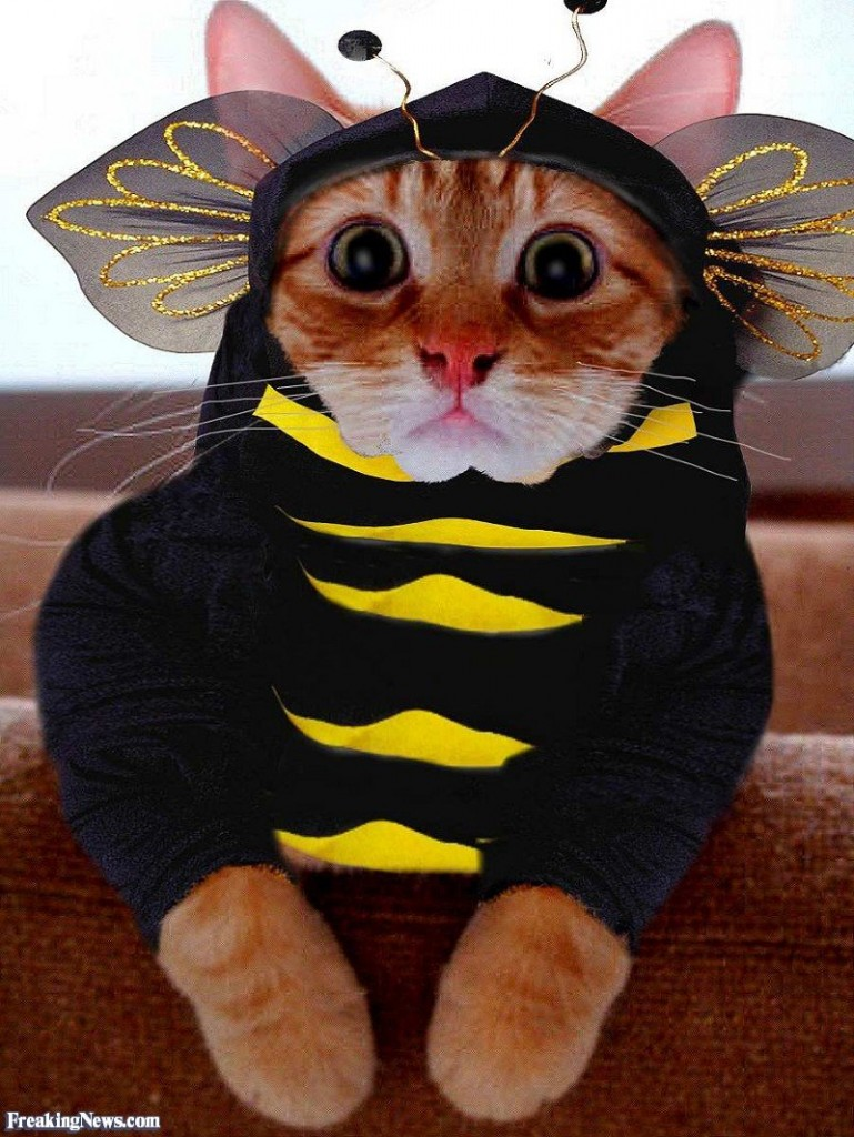 10 Adorable Cats In Costumes That Will Brighten Up Your Day