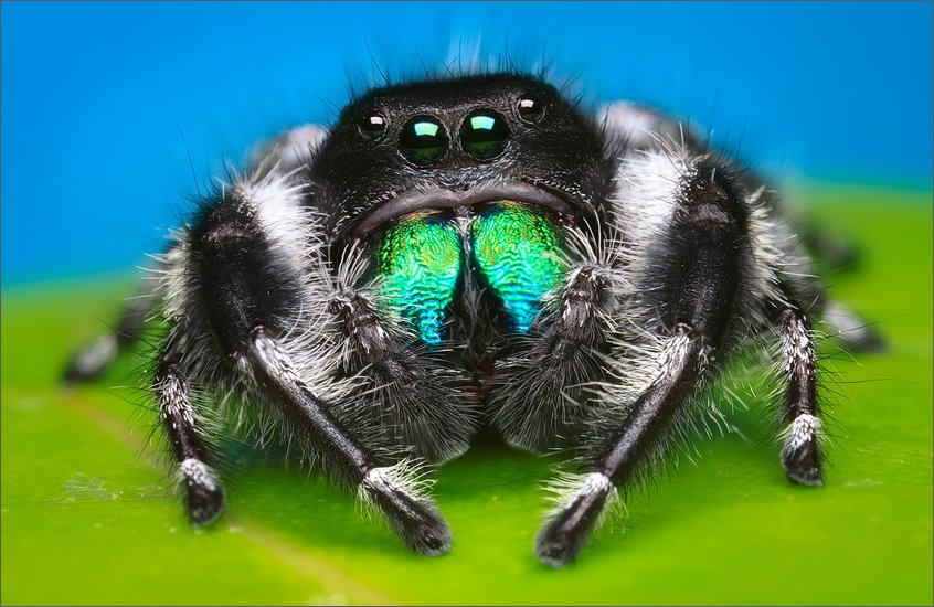 10 Adorable Spiders To Conquer Your Arachnaphobia