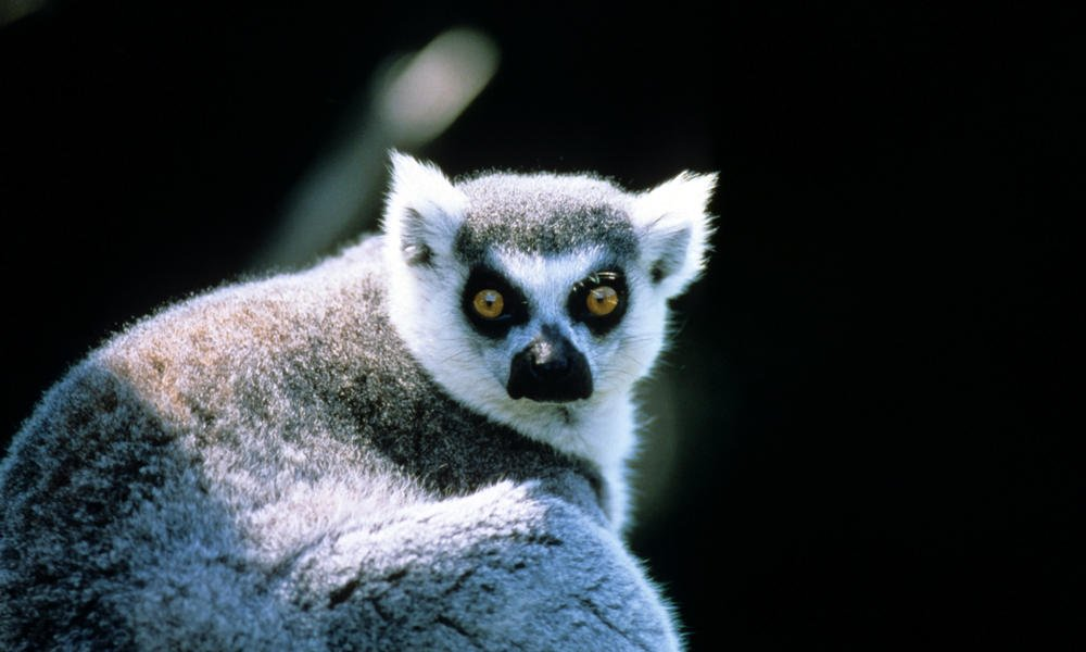 10 Awesome Facts About The Mysterious Island Of Madagascar