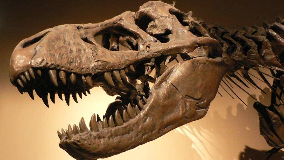 10 Dinosaurs The World Only Just Discovered