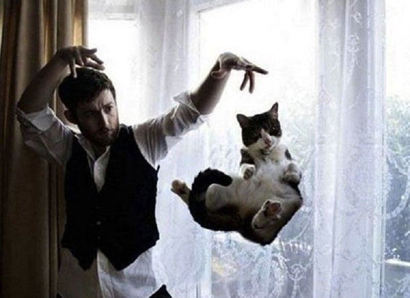 10 Hilarious Animal Photographs That Are Perfectly Timed