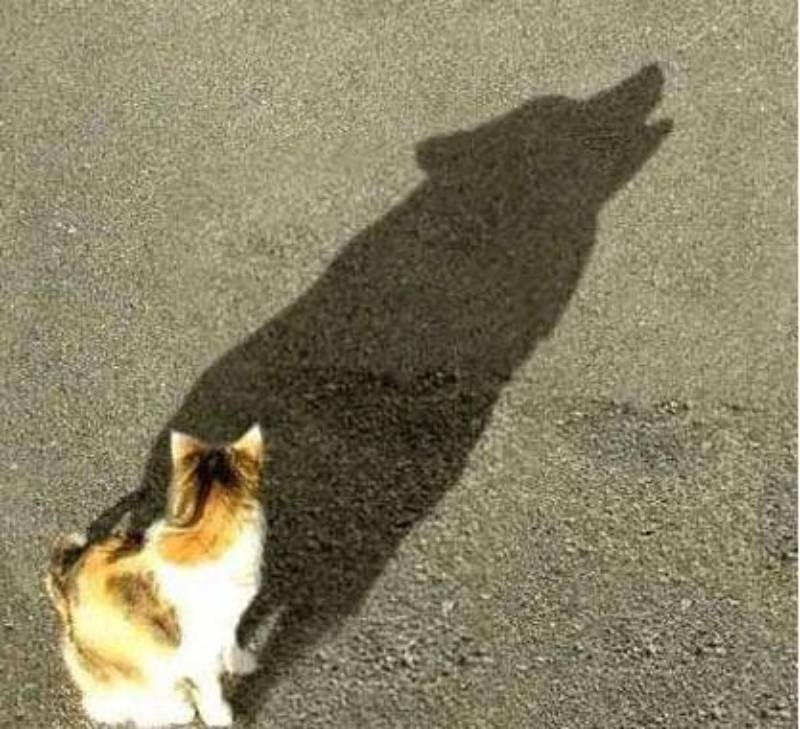 10 Misleading Shadows That Tell Shockingly Different Tale