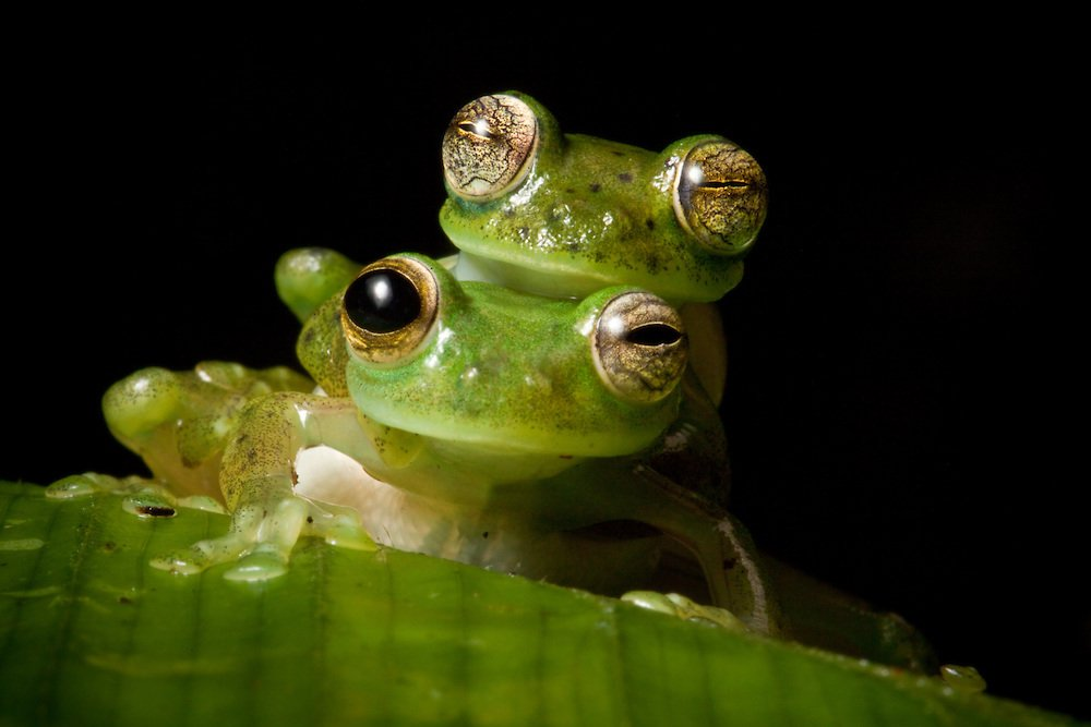 10 Of The Most Bizarre Frogs You'll Ever See