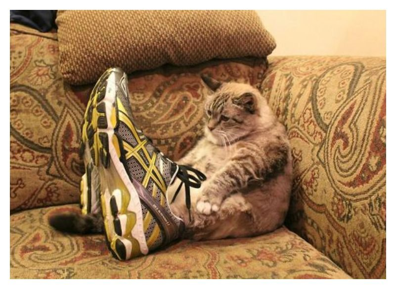 3a4d9292094ef 20 Cute Photos Of Animals Wearing Shoes