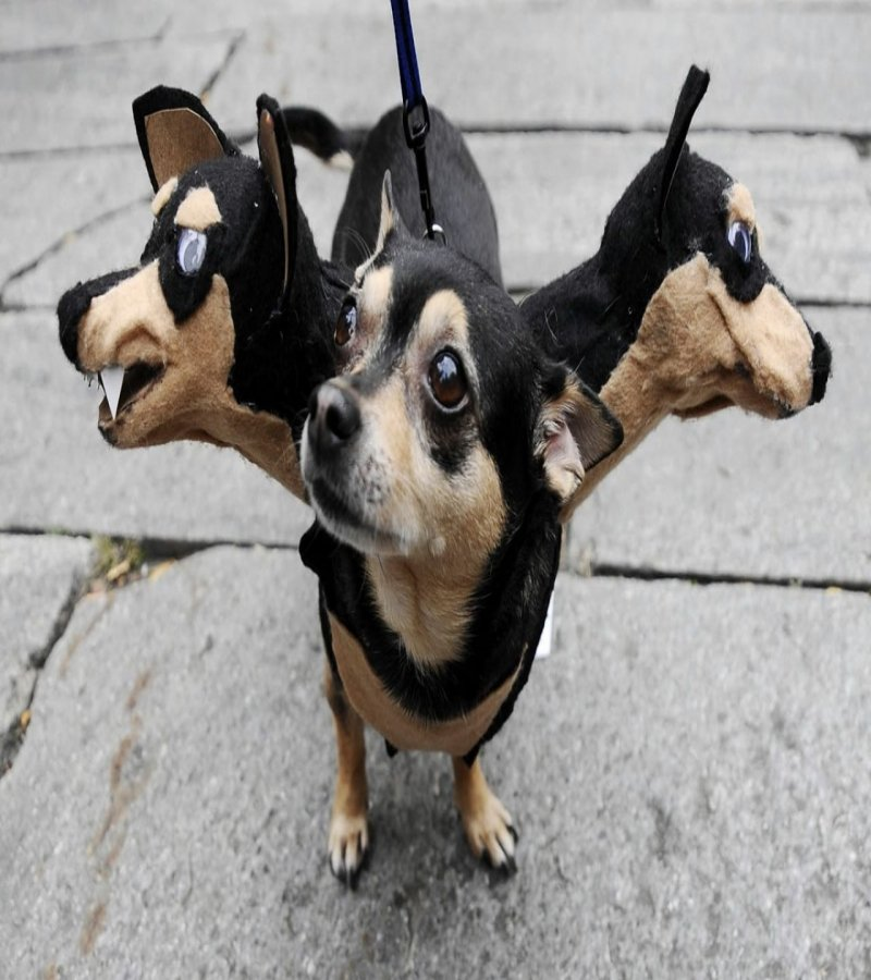 20 of the best dog costumes you will ever see for Best dogs for you