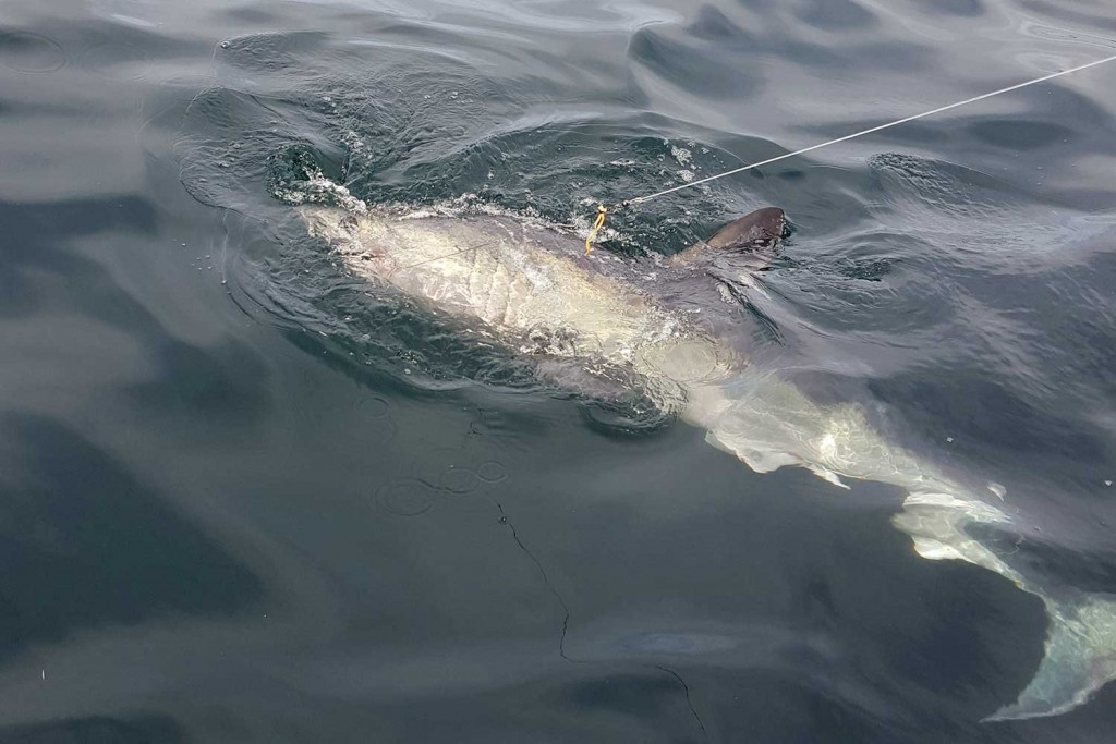 Man Catches Eight-Foot Shark Off The Coast Of Sunderland