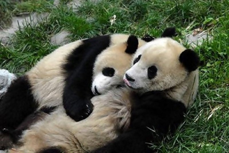 10 Adorable Pictures Of Animals Being Used As Pillows
