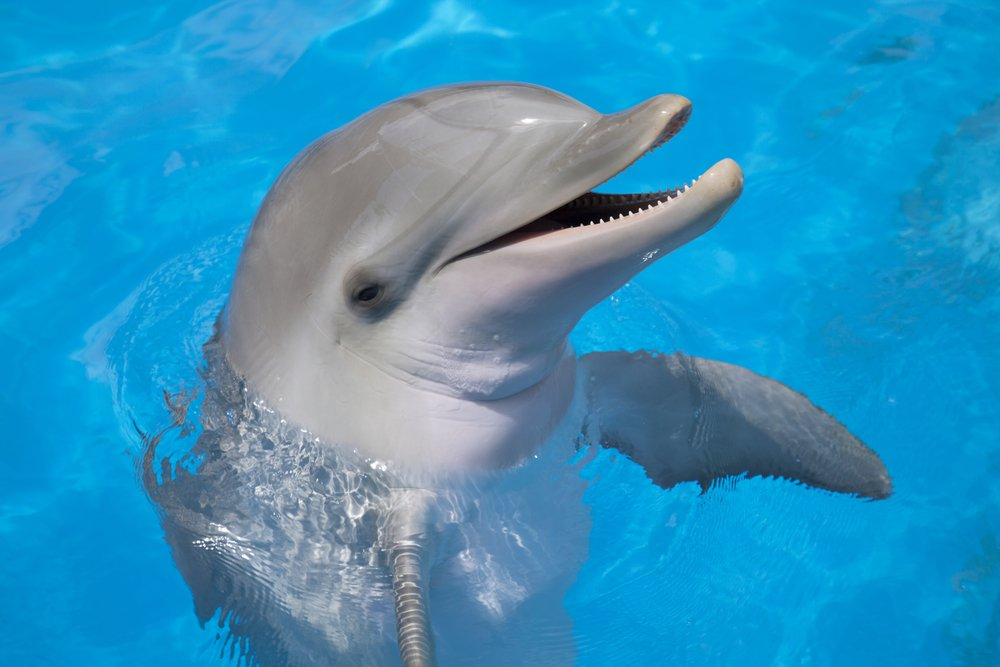 10 Crazy And Awesome Facts About Dolphins