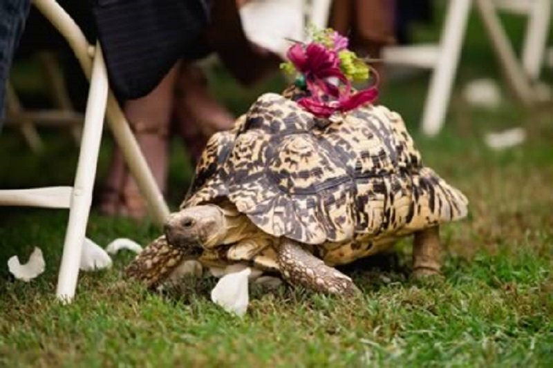 10 Hilarious And Adorable Pictures Of Ring Bearers