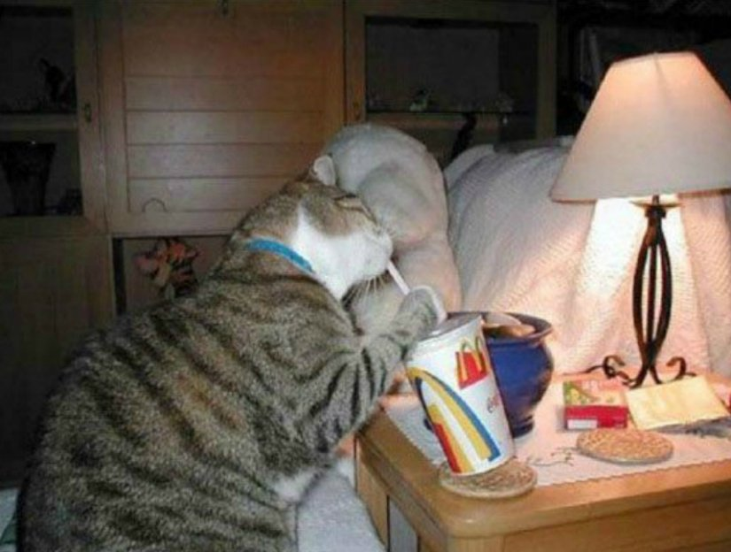 10 Hilarious Cats Trying To Be Human
