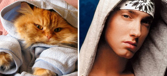10 Incredible Cats That Look Like Famous People