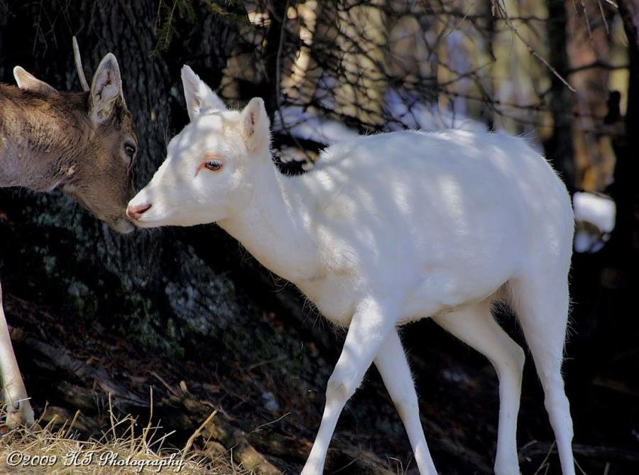 10 Of The Coolest Albino Animals You'll Ever See