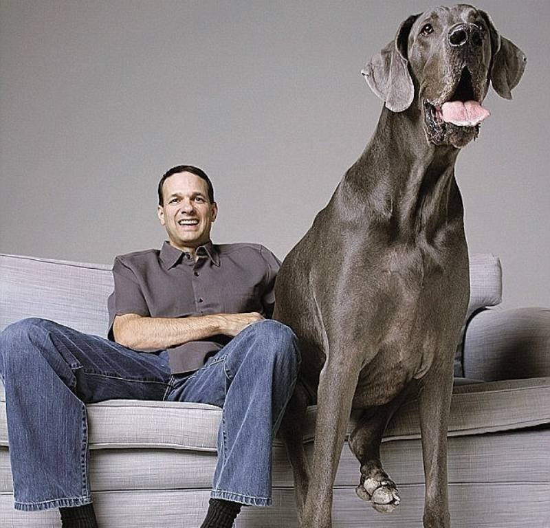 10 Of The Largest Pets Humanity Has Ever Seen