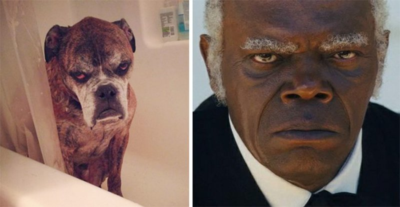 10 Pictures Of Celebrities And Their Animal Doppelgangers