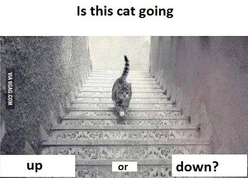 Is This Cat Going Up Or Down Stairs? One Professor Has Your Answer