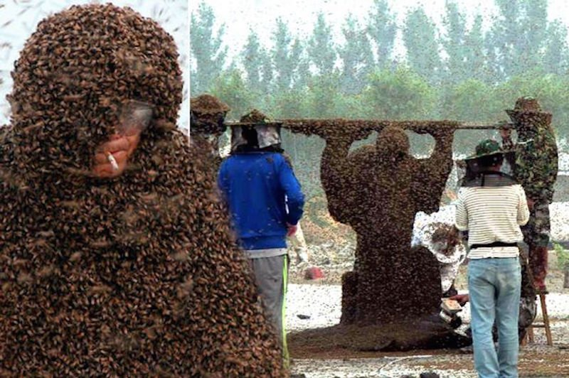Man Smokes Cigarette While Covered With 1.1 Million Bees And Breaks World Record