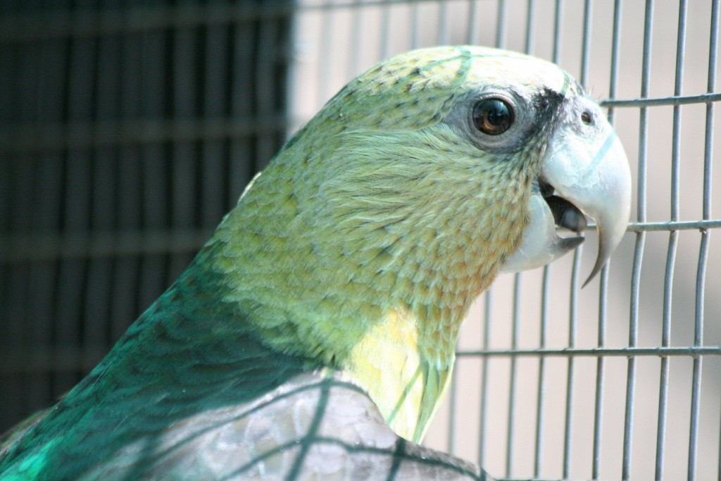 Parrot Summoned By Police For Shouting Obscenities