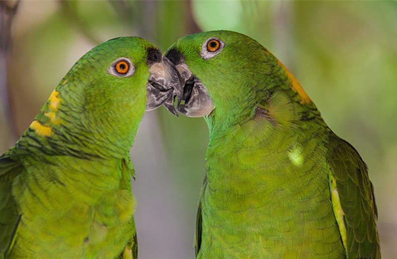 20 Animals With Hilarious Mating Rituals And Sexual Habits