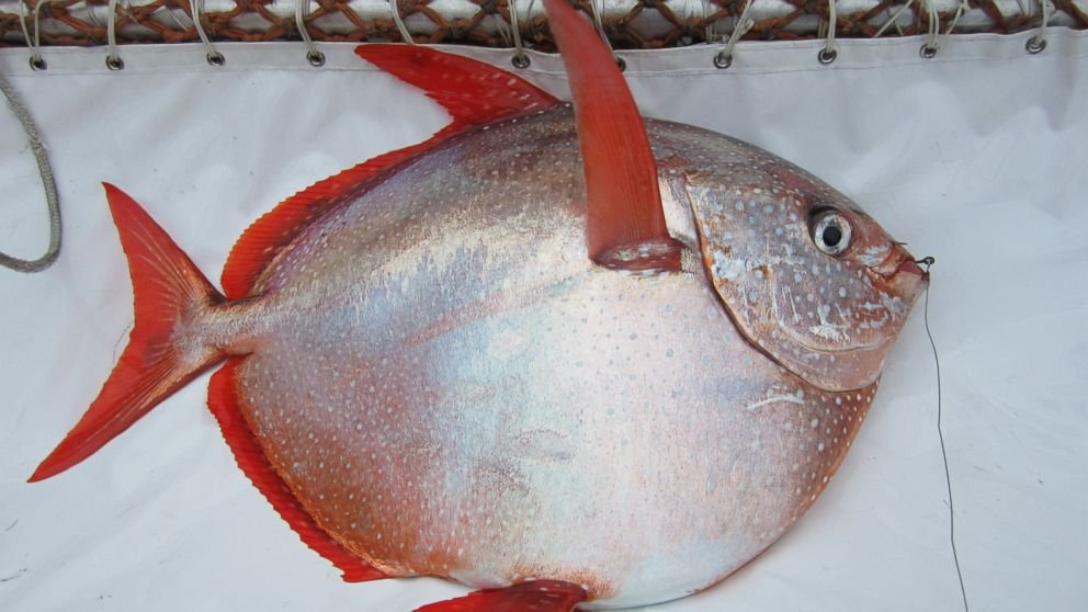 World's First Fully Warm-Blooded Fish Discovered