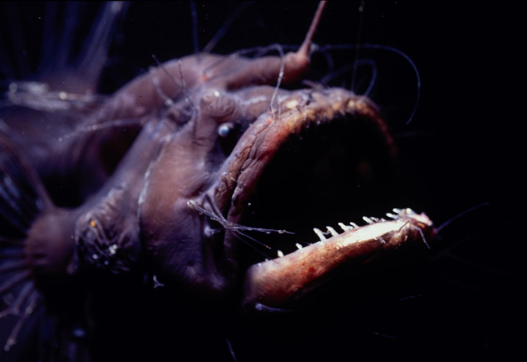 15 Of The Freakiest Deep-Sea Creatures